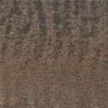 B7 - goldbraun, glänzend, Zebra - +125,00€