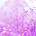 Gräser, fliederfarben