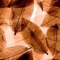 Blätter, transparent braun