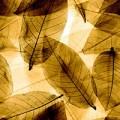 Blätter, transparent gold - +273,00€