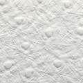 Blanc autruche